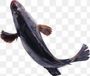 Fish - Fish Euclidean Vector PNG