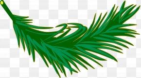 Palm Tree - Leaf Arecaceae Palm Branch Frond Clip Art PNG