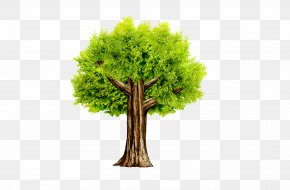 Trees - Tree Icon PNG