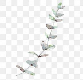 Nordic Wind Eucalyptus Leaves - Gum Trees Leaf PNG