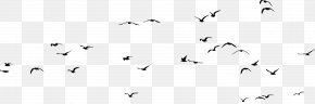 Animal Migration Bird - Flock Bird Migration Bird Animal Migration PNG