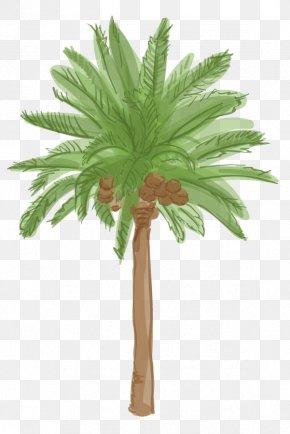 Date Palm - Arecaceae Tree Date Palm Plant Roystonea Regia PNG