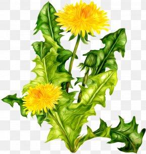 Dandelion - Common Dandelion Clover Icon PNG