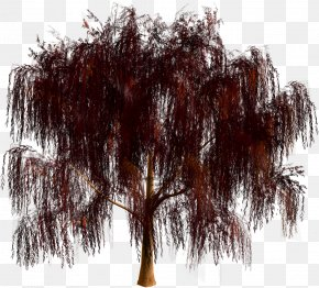 Tree - Tree Forest Clip Art PNG