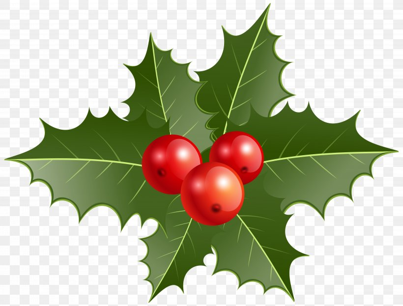 Common Holly Christmas Decoration Clip Art, PNG, 8000x6081px, Common Holly, Aquifoliaceae, Aquifoliales, Berry, Cherry Download Free