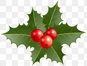 Christmas Holly Clip Art - Common Holly Christmas Decoration Clip Art PNG