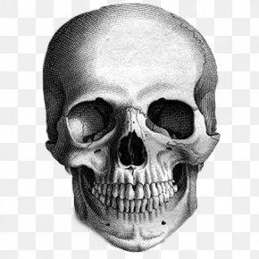 Skull - Calavera Skull Drawing The Human Head Sketch PNG
