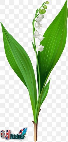 Lily Of The Valley - Lily Of The Valley Lilium 'Stargazer' Clip Art PNG