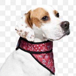 Puppy - Dog Breed Beagle English Foxhound Treeing Walker Coonhound Puppy PNG