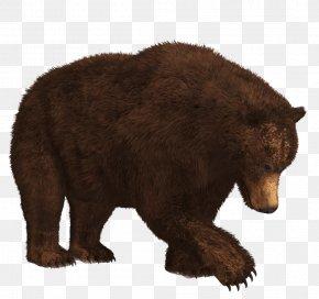 Polar Bear - American Black Bear Kamchatka Brown Bear Polar Bear Grizzly Bear PNG
