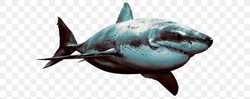 Hungry Shark Evolution Great White Shark Desktop Wallpaper