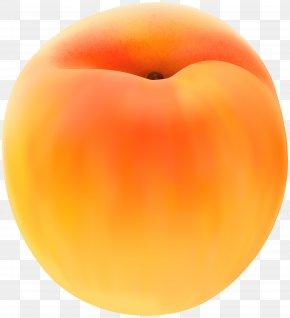 Apricot Free Clip Art Image - Peach Apricot Clip Art PNG