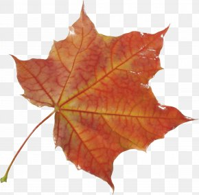 Autumn Leaf - Autumn Leaf Color Autumn Leaf Color PNG