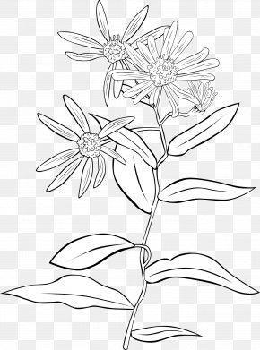 A Wild Chrysanthemum - Shrubs & Trees Garden Shrubs Plant Clip Art PNG