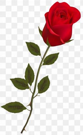 Rose Image - Rose Red Clip Art PNG