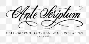 Y Alphabet - Logo Calligraphy Handwriting Brand Font PNG
