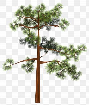 Tree Clipart Image - Pine Clip Art PNG