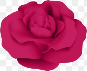 Dark Pink Rose Transparent Clip Art - Garden Roses Centifolia Roses Clip Art PNG