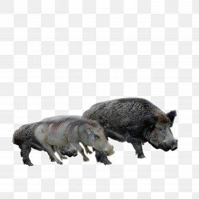 Black Boar - Wild Boar Euclidean Vector PNG