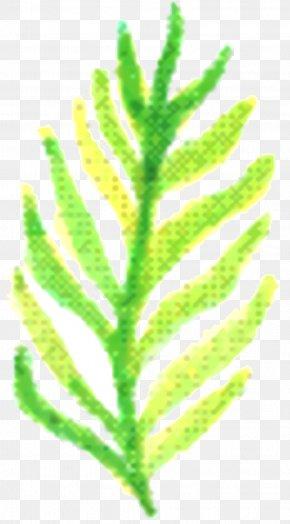 Vascular Plant Flower - Green Leaf Background PNG