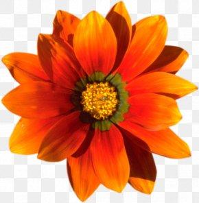 Blanket Flowers - Eid Al-Fitr Holiday تهنئة Zakat Al-Fitr PNG