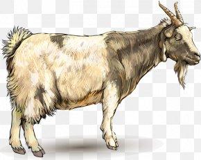 Goat - Goat Ahuntz Drawing Animal PNG