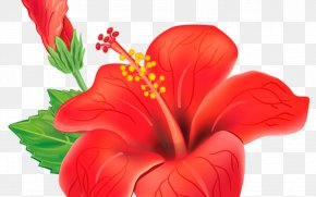 San Diego Flower - Shoeblackplant Vector Graphics Royalty-free Clip Art Stock Photography PNG