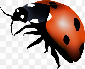 Ladybird Insect Autumn Summer Spring PNG