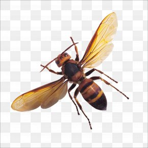 Bug - Apis Florea Insect Bee Butterfly Wing PNG