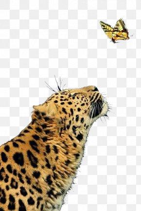 Ferocious Cheetah - Leopard Cheetah Jaguar Butterfly Felidae PNG