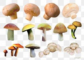 Abalone Mushrooms - Common Mushroom Fungus Edible Mushroom Chanterelle Image PNG