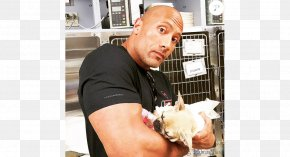Dwayne Johnson - Dwayne Johnson French Bulldog The Rock Says-- : The Most Electrifying Man In Sports-entertainment Puppy Death PNG