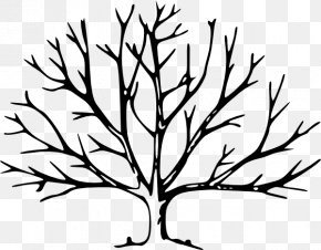 Tree Trunk Images - Tree Drawing Silhouette Clip Art PNG