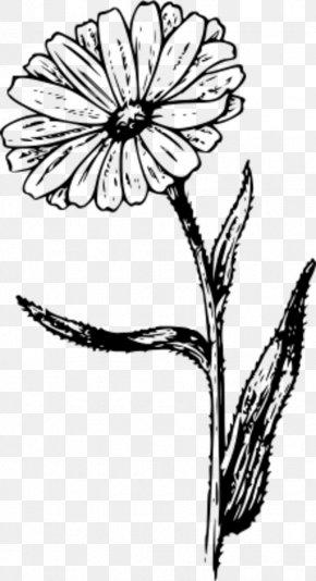 Cartoon Plumeria - Marigold Clip Art PNG