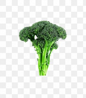 Lettuce Broccoli - Broccoli Cabbage Cauliflower Vegetable Lettuce PNG