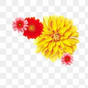 Peony - Chrysanthemum ×grandiflorum Yellow Flower Dendranthema Lavandulifolium PNG