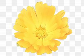 Perennial Plant Cut Flowers - Flowers Background PNG