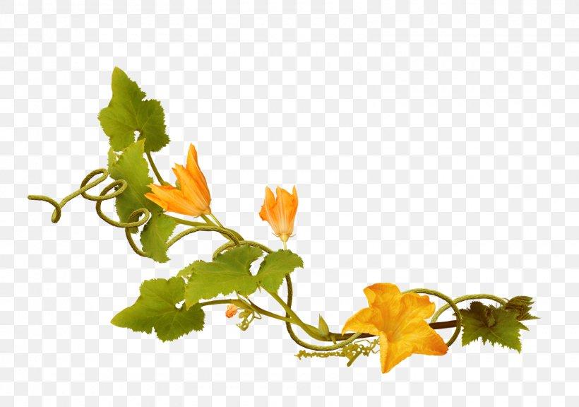 Leaf Vegetable Petal Plant Stem Flowering Plant, PNG, 1600x1124px, Leaf, Branch, Branching, Flora, Flower Download Free