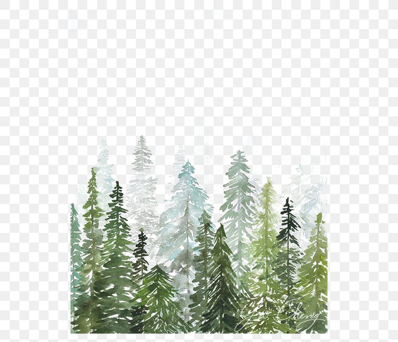 Watercolor Trees, PNG, 564x705px, Watercolor Landscape, Art, Branch, Conifer, Conifer Cone Download Free