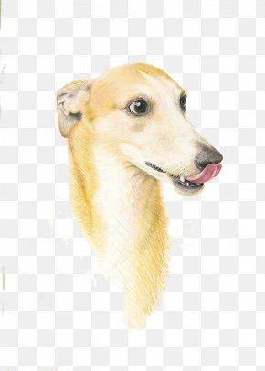 Tongue Sticking Out Dog - Italian Greyhound Whippet Longdog Pekingese Dog Breed PNG