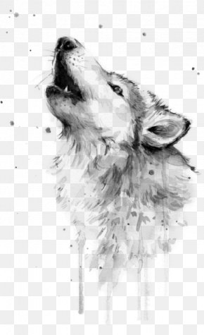 Watercolor Fox - Watercolor Painting Gray Wolf Art Drawing PNG