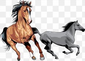 Horse - Horse Equestrian Clip Art PNG