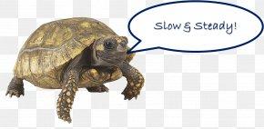 Turtle - Wood Turtle Tortoise Reptile Animal PNG