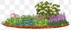 Flower Garden Conifers Juniper Panicled Hydrangea Arborvitae PNG