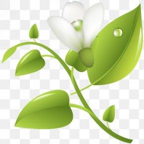 Leaf - Leaf Desktop Wallpaper Plant Stem Graphics Product Design PNG