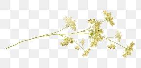Leaf - Twig Desktop Wallpaper Plant Stem Grasses Leaf PNG