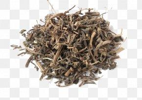 Mama Purslane Herbs Wasp Dish Dish - Amaranthus Tricolor Common Purslane Chinese Herbology U6e7fu75b9 PNG