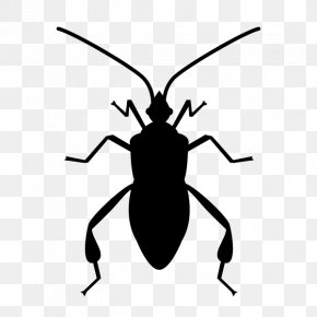Insect - Insect Software Bug Clip Art PNG