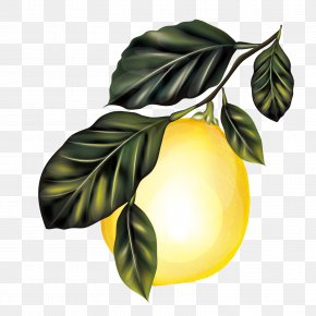 Vector Lemon Tree - Lemon Branch Fruit Tree PNG