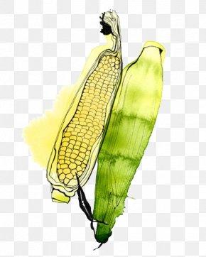 Corn - Watercolor Painting Illustrator Fruit Illustration PNG